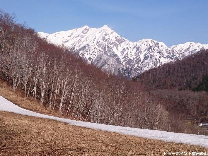 白樺と鹿島槍ヶ岳