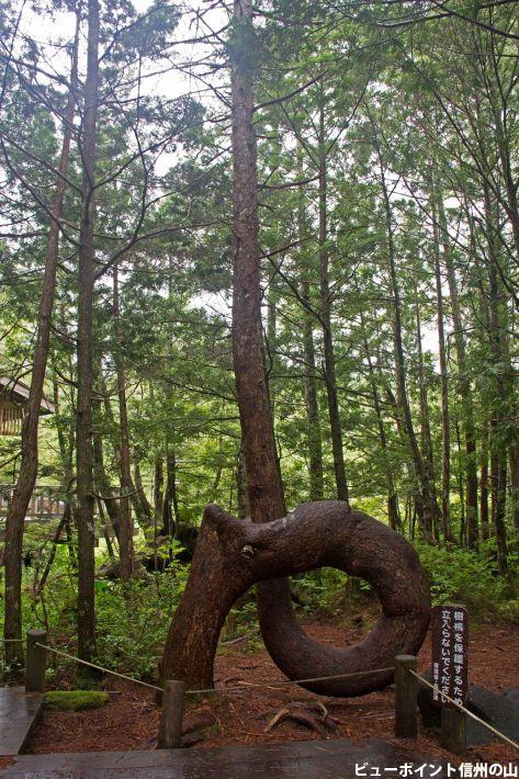 ねじねじの木