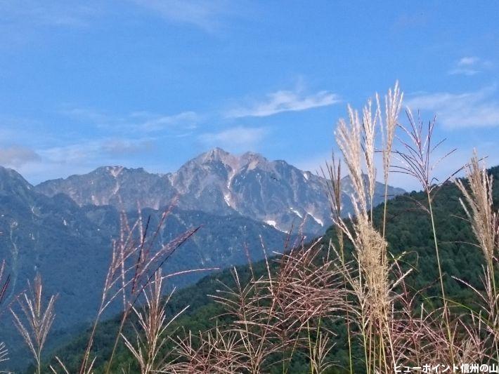 五竜岳とススキ