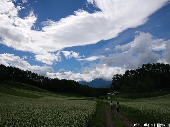 中山高原の蕎麦