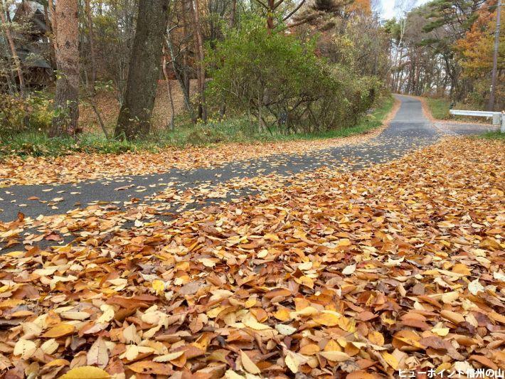 秋色の路(天平の森)