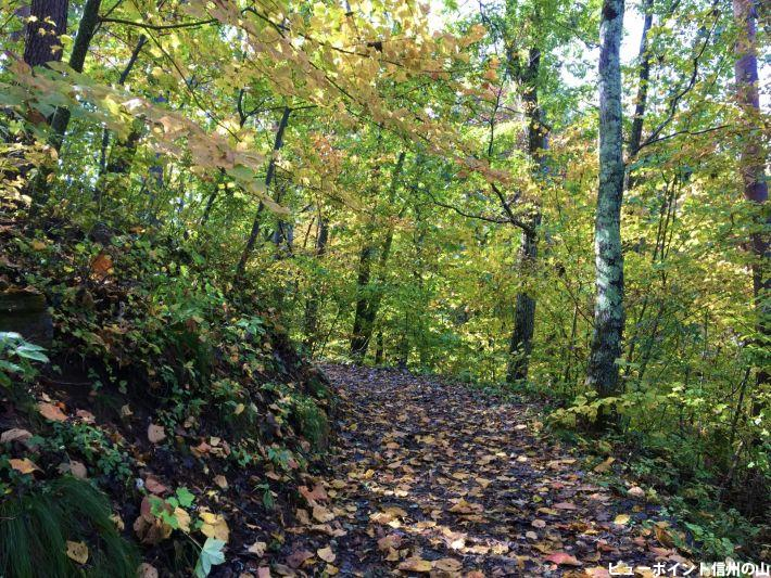 天平の森まで秋の道