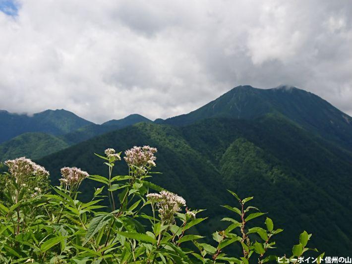高山植物と常念岳